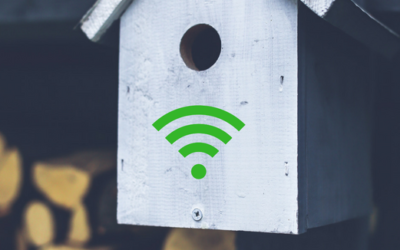 Birdhouses in Amsterdam offer free Wi-Fi for clean air
